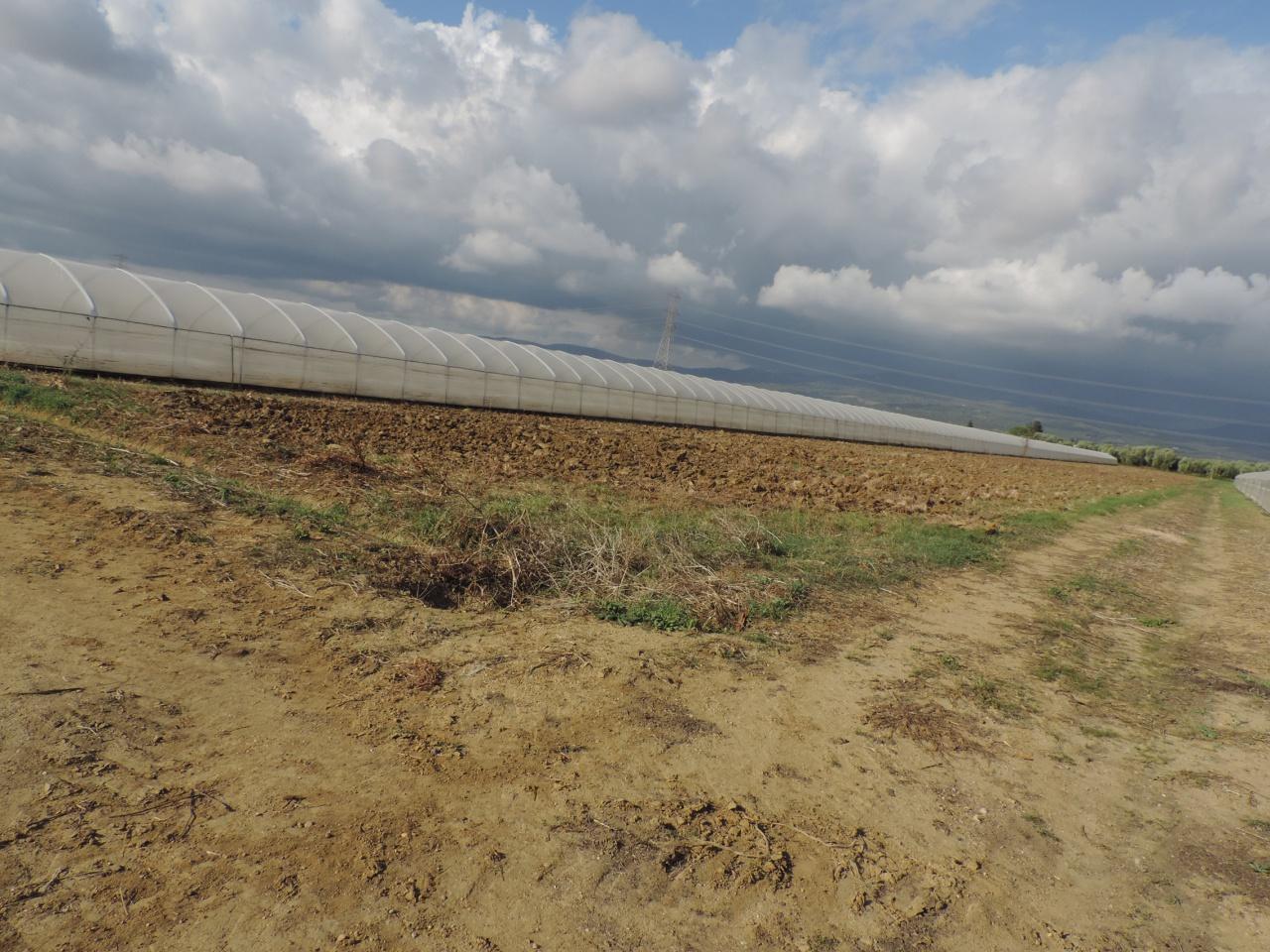 azienda agricola vendita roccastrada sticciano scalo