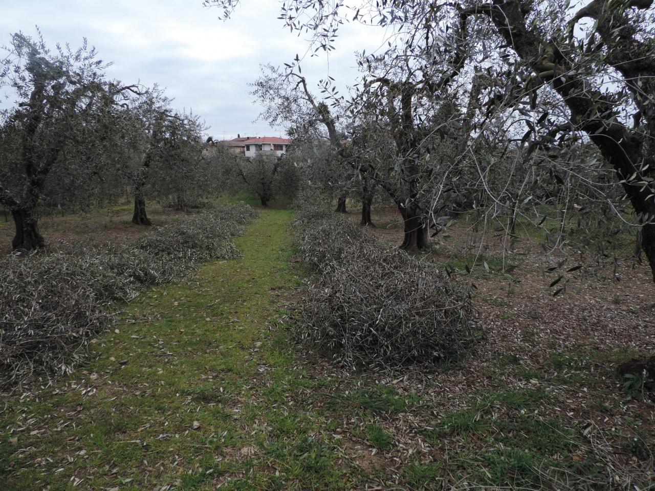 terreno agricolo vendita roccastrada ribolla